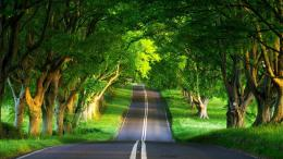 Strange Road In Scary Wood Wallpaper HdFree Android Application 354