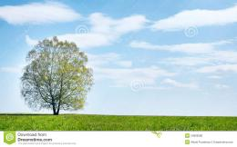 Summer Landscape With Lonely Tree Against Blue Sky Stock PhotoImage 1165