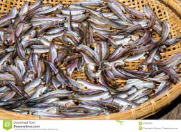 Small Fish Drying On Bamboo Basket In The Sun Stock PhotoImage 211