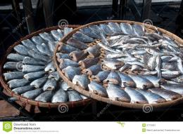 Sun Fish In Threshing BasketRoyalty Free Stock PhotographyImage 1260