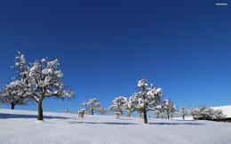 Snow covered trees on the field wallpaper 663