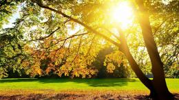 Download Sunlight through the tree wallpaper in Nature wallpapers with 470