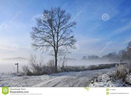 Mist rising over snow covered fields with winter tree silhouette 1168