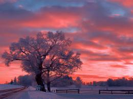 winter sunset sky snow tree color nature hd wallpaper 1310863 1347