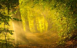 Enchanted forest path Wallpapers Pictures Photos Images 1605
