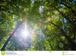 Sun Shining Through Treetops Royalty Free Stock PhotographyImage 762