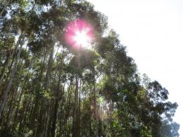 PanoramioPhoto of Sun Rays through Tree Tops, Marayoor, Kerala 1249