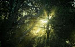 Sunlight breaking in through the tree tops wallpaper #2540 423