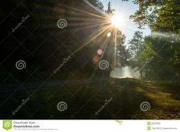 Sun rays through treetops over local Forest Road nearby Daruvar 553