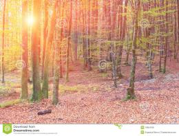 Sunrise In Autumn ForestStock PhotoImage: 16654180 1838