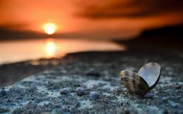 beach wallpaper, seashells, sunset, landscape | HD Wallpapers Desktop 1606