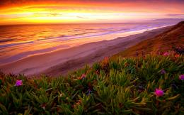 Beach Ocean Sunset Plant flowers shore coast sea waves sky clouds 889
