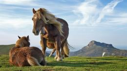 Horses in the wild wallpaper 492
