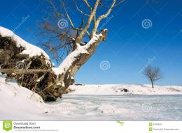 Image of Snag And Tree On Winter Lake Shore Shot In Poltavska Region 646