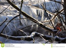 Winter Scene: Frozen Tree On A Lake Shore Royalty Free Stock Photo 676