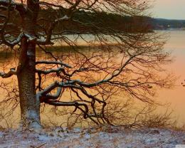 Similar wallpapers for Tree on the lake in winter 119