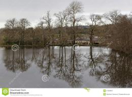 Lake Reflection Of Trees In Winter Royalty Free Stock Photography 142