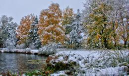trees forests autumn fall seasons winter snow frost shore lakes 685
