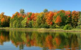 trees in lake nature wallpaper free colorful trees in lake nature 480