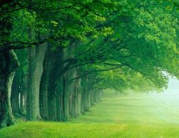 Nature Photography Wallpaper: Nature Trees LineNature Photography 1226