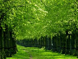 Latest Great Water Trees Green Nature HD Wallpapers #7010 | HD 991