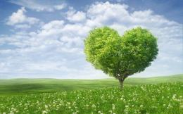 Heart tree in nature field HD Wallpaper 701