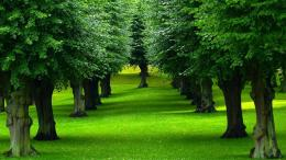 Trees, the natural source of oxygen and the Earth, the planet of 127