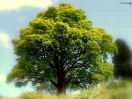 free best tree nature wallpaper free best tree nature windows 874