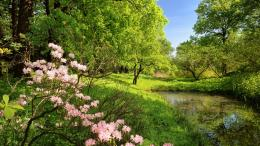 landscapes, nature , trees , pond, Flowers | Free HD wallpapers 923