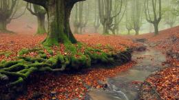 moss covered tree roots in gorbea natural park basque country spain 436
