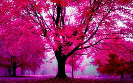Nature in pink forest trees wallpaper 447