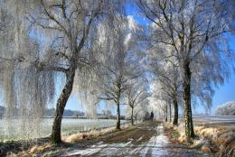 Trees in winterNature\'s Seasons Photo22173984Fanpop 1319