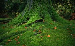 Moss Covered Stones Trees HD Nature Wallpapers Download Free 1779