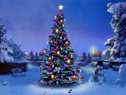christmas tree nature 800x600 download christmas tree nature 1135