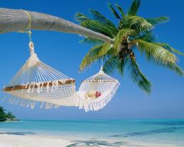 tropical beach hammock wallpapers picture 1888