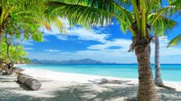 Tropical Beach Scenes Cool 991