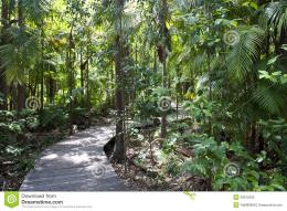 Jungle With Walking Path Stock PhotoImage: 28075290 1701