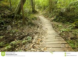 Jungle Wooden Path Stock PhotographyImage: 29099402 1198
