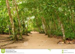 Jungle Path Stock PhotoImage: 43102541 178