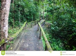 Jungle Path Stock ImagesImage: 34898364 534