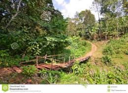 Old Bridge On A Walking Path In A Jungle Stock PhotoImage: 28188440 1455