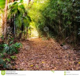 Jungle Path Royalty Free Stock ImagesImage: 31230909 1466