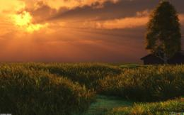 Sunset over wheat field wallpaper #4546Open Walls 525