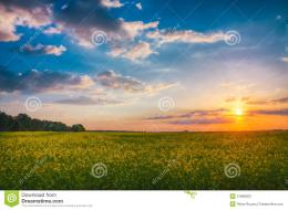 Wheat Field At Sunset Stock PhotosImage: 31698203 1771
