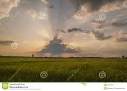 Wheat Field At Sunset Stock PhotoImage: 40242342 1421