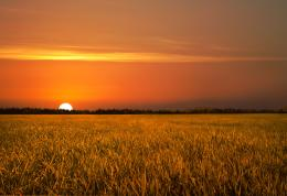 Golden Field Sunset Stock by leeorr stock on DeviantArt 570