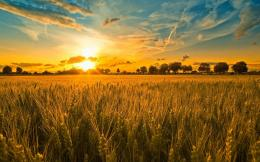 Sunset Field HD Wallpapers | Sunset Field Images | Cool Wallpapers 368