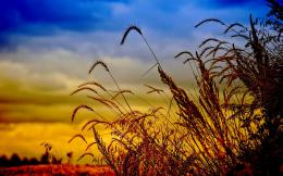 Wheat Field Wallpaper | Wheat Field Images | Cool Wallpapers 318