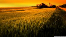 wallpaper field wheat sunset paint images 1920x1080 602