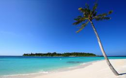 Beach Palm White Sand Wallpapers Pictures Photos Images 1564